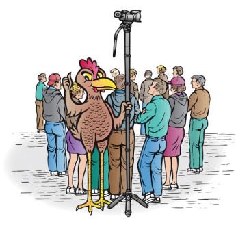 Varizoom chickenfoothead al 12