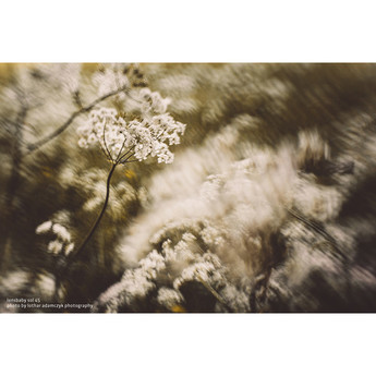Lensbaby lbs45f 14